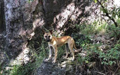 Caravana Canina & Coyote Aventuras