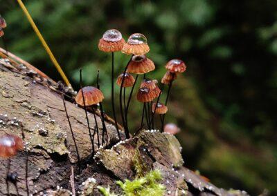 mushroom-forest-2, oaxaca mexico