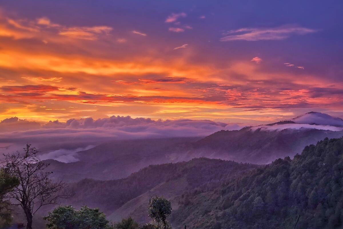 WELLNESS & HEALING mushroom-forest-cover oaxaca mexico