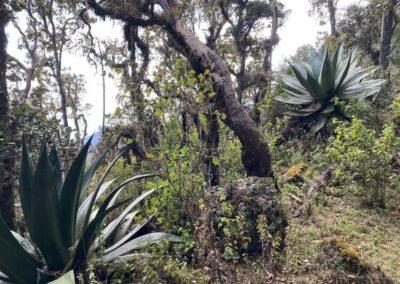 IMG_5608-caminata bosque ixtepeji oaxaca mexico